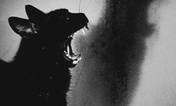 gatto-nero-564x341